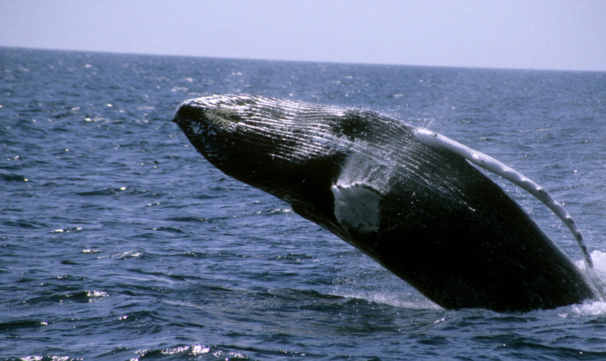 Sail away on a Whale Watch trip